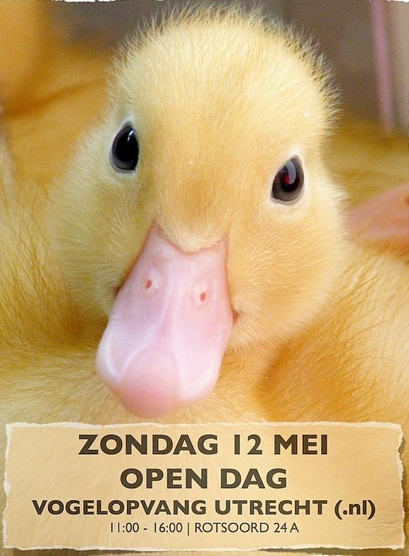Vogelopvang open dag 12 mei 2013